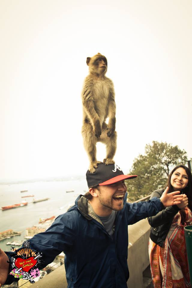 Gibraltar monkey standing on erasmus student head during the tour on the Morocco Weekend Trip