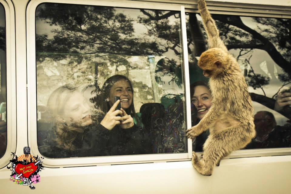 Monkey hanging on bus window while study abroad students take pictures from inside on the Morocco Fantasy Weekend Tour