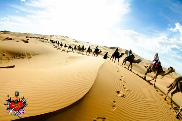 International students riding camels through the Sahara Desert dunes in Merzouga Morocco with We Love Spain